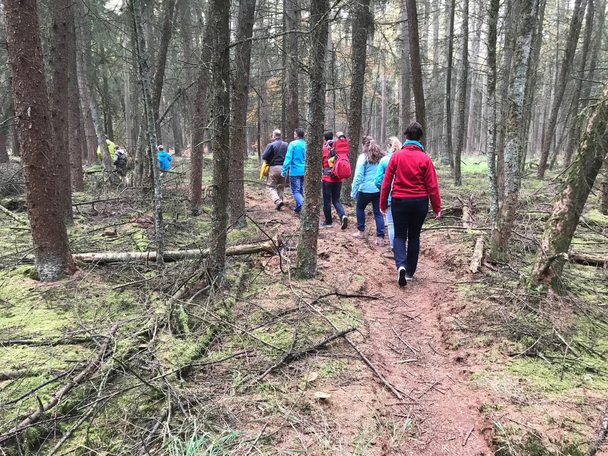 Mindful Walk groep lopend over smal bemost bospad tussen hoge, smalle bomen